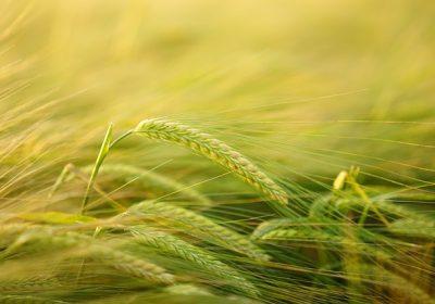 [농업/비료] Suspensions, 현탁(서스펜션) 비료