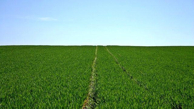 [농업/비료] Boron Nutrients 붕소 비료, 영양제