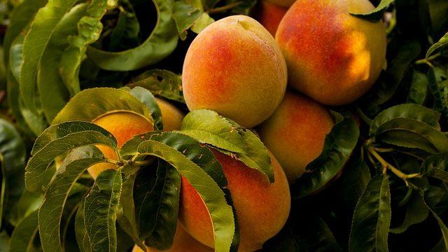 [농업/비료] Biostimulant, 생물자극제 비료