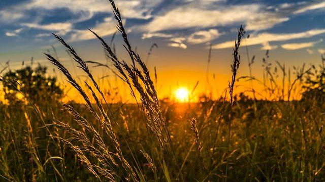 [농업/비료] NPK Nutrients, NPK 영양제, 비료