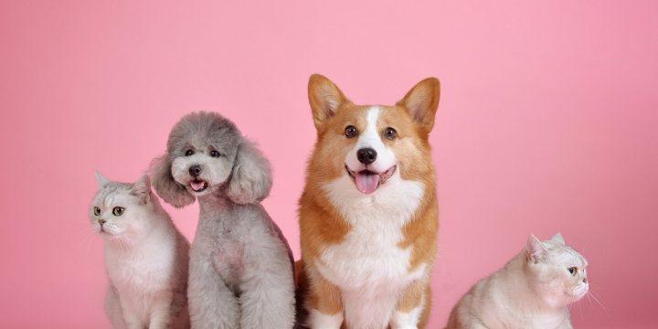펫 푸드(Pet food) 천연 사료 첨가제 – 멜론추출 가공품